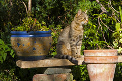 Cat in the sunny garden Royalty Free Stock Images