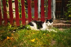 Cat in the sunny morning. Garden royalty free stock images