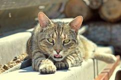 Cat in sunrise Stock Photography