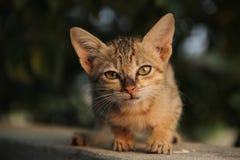 Cat sunrise Royalty Free Stock Photo