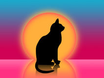 Cat and sunset. Cat silhouette and evening sunset Stock Photos