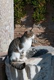 Cat at sunset in ancient town Royalty Free Stock Images
