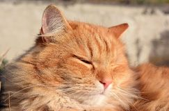 Cat in the sunset. Portrait beautiful cat on the garden Royalty Free Stock Image