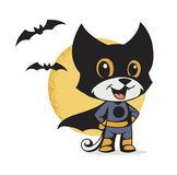 Cat superhero Royalty Free Stock Images