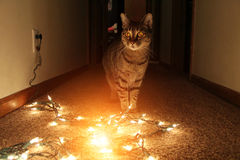 Cat surprised by the glowing Christmas lights. Cat surprised by the glowing Christmas lights Royalty Free Stock Images