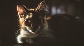 Cat surprised at sunlight in the morning. stock image