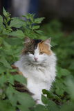 Cat surrounded by Plants Royalty Free Stock Photos