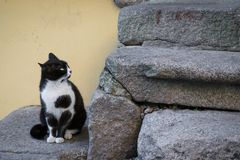 Cat suspiciously staring. Towards a stone stair Royalty Free Stock Image