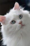 CAT SVEGLIO fotografie stock
