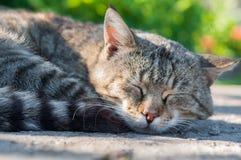 Cat sweet sleeping on an asphalt road royalty free stock photos