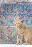 Cat & Sweet wall Royalty Free Stock Image