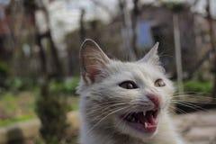Cat. Sweet White cat Stock Image