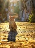 Cat. Sweety cat shadows stock photos