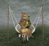 Cat on the swing stock image