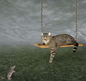 Cat on a swing Royalty Free Stock Images
