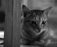 CAT TABBY НА ДЕРЕВЯННОМ СТУЛЕ Стоковое Фото