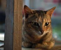 CAT TABBY НА ДЕРЕВЯННОМ СТУЛЕ Стоковая Фотография