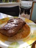 Cat at the table. Cat sitting at dinner table, steak on a plate and cat in the background stock photos