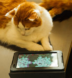Cat with tablet Royalty Free Stock Photos