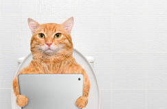 Cat with a tablet pc in a toilet. Stock Photography