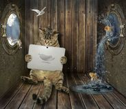 Cat with tablet on ship stock photo