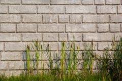 Cat Tails devant le mur de soutènement de brique Image libre de droits