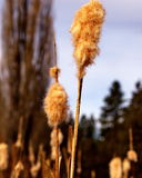 A cat tails end Stock Photography