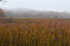 Marshlands in the fall in New England Royalty Free Stock Photography