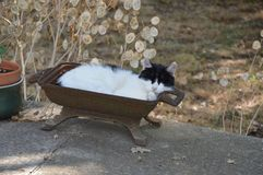 A cat take a rest outside. Countryside Stock Photography