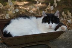 A cat take a rest outside. Countryside Royalty Free Stock Photo