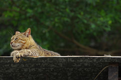 Cat take a rest outside Royalty Free Stock Photo