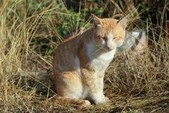 A cat take sunbathe Royalty Free Stock Photo