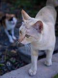 Cat Takes Care grande del pequeño gato Fotografía de archivo libre de regalías