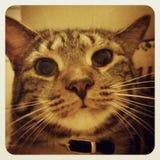 Cat. Takes selfie Stock Photos