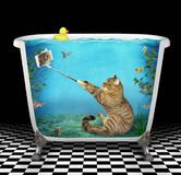 Cat takes a selfie underwater in the bathtub. The funny cat takes a selfie underwater on the seabed in the bathtub against the background of fish royalty free stock photo