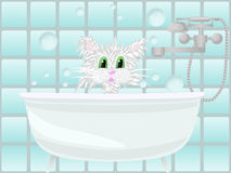Cat taking bath Stock Images