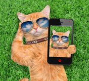 Cat Taking ein Selfie stockbilder