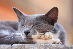 Cat taking a nap outdoors Stock Photo