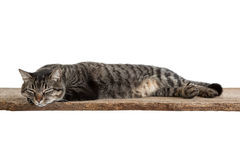 Cat Taking a Nap Stock Images