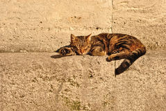 Cat taking a nap Royalty Free Stock Images