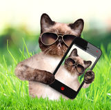 Cat taking a selfie with a smartphone Royalty Free Stock Photo
