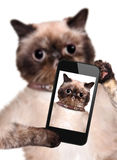 Cat taking a selfie with a smartphone Stock Images
