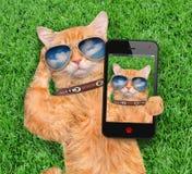 Cat Taking un Selfie imagenes de archivo