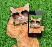 Cat Taking un Selfie fotografía de archivo libre de regalías