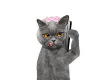 Cat is talking over the mobile --  on white Stock Image