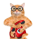 Cat talking on the phone. Stock Photo