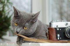 Cat tasting profession photographer taste Stock Photos