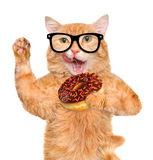 Cat tea time with donut . Stock Images