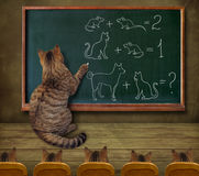 Cat teacher and his pupils Stock Images