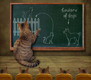 Cat teacher and his pupils Stock Photos